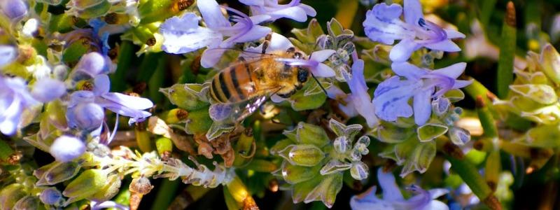 dripping springs bee garden